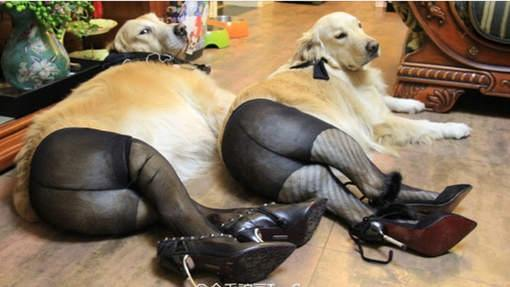 chiens-collants