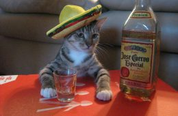 chat-mexicain-boit-tequila-apero
